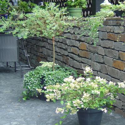 gartenmauer aus bildgif tolle ideen fr gartenmauer aus naturstein fr den garten bau einer. Black Bedroom Furniture Sets. Home Design Ideas
